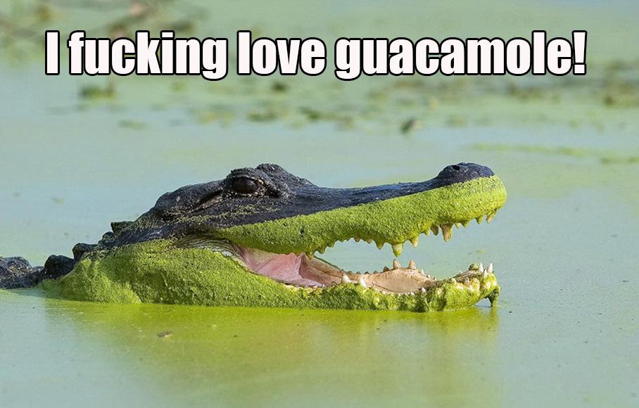 I Fucking Love Guacamole!