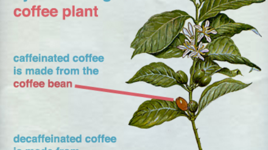 How Decaf Is Produced