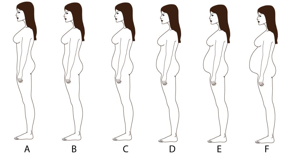 bootstrap measurement belly protuberance